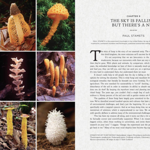 Fantastic Fungi, the Book