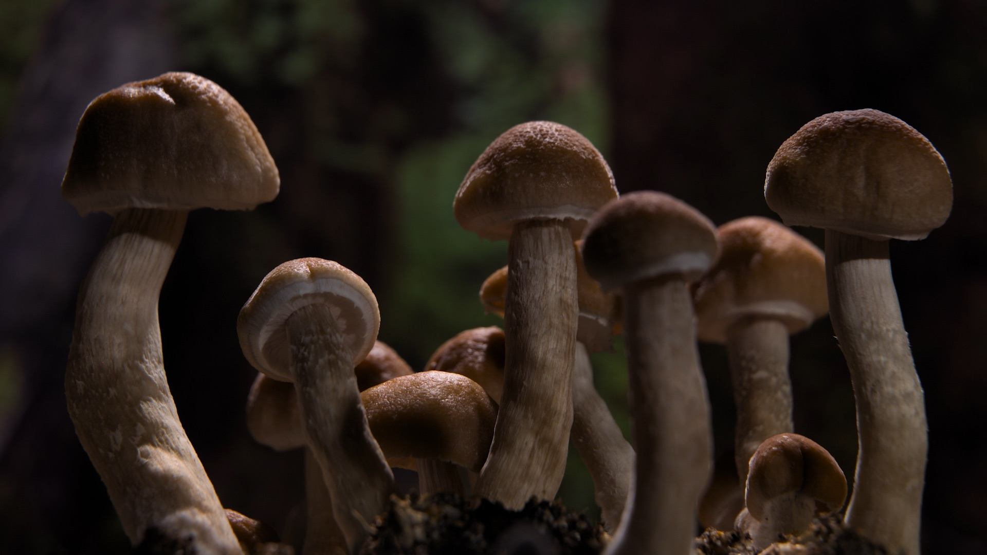 Are Legal Psilocybin Mushrooms Coming?